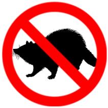 raccoon-removal-oshawa